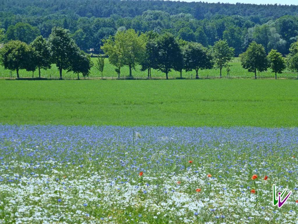 Feld im Sommer bei Stuecken
