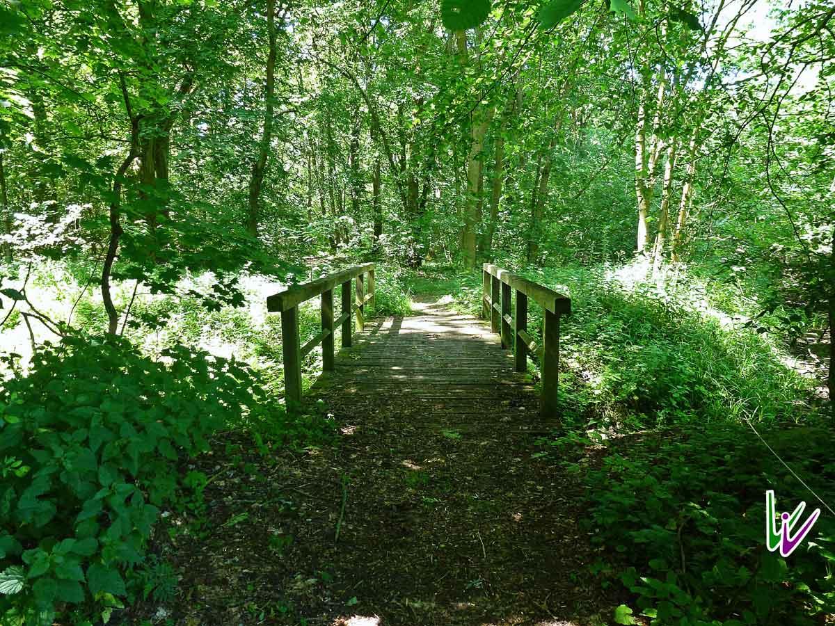 Grüner Steig mit Brücke