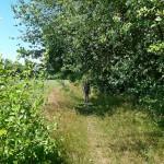 Heckenweg bei Stuecken