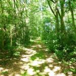 Wald bei Stucken