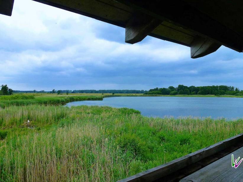 Blick vom Vogelbeobachtungsturm Stangenhagen