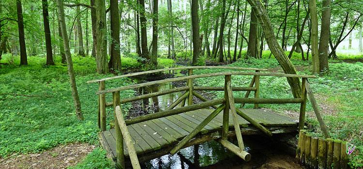 Briesener Bach mit Brücke