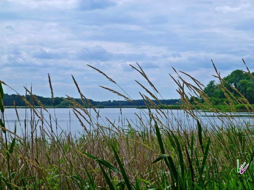Schwanensee bei Stangenhagen
