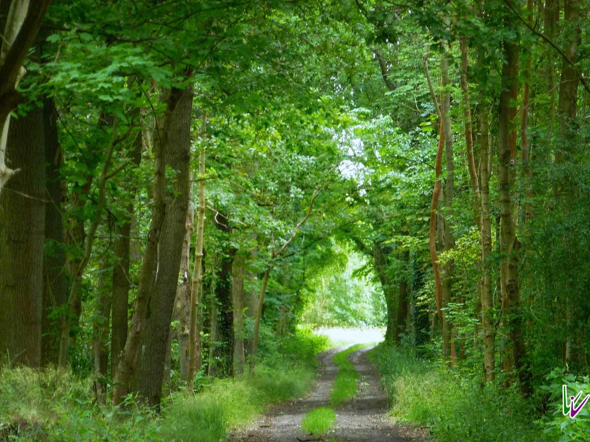 der Wald bei Blankensee