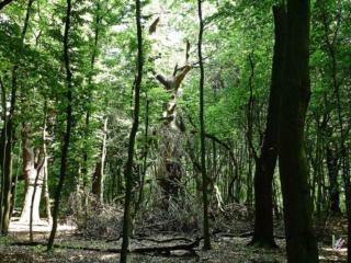 Der Zart als Teufelswald