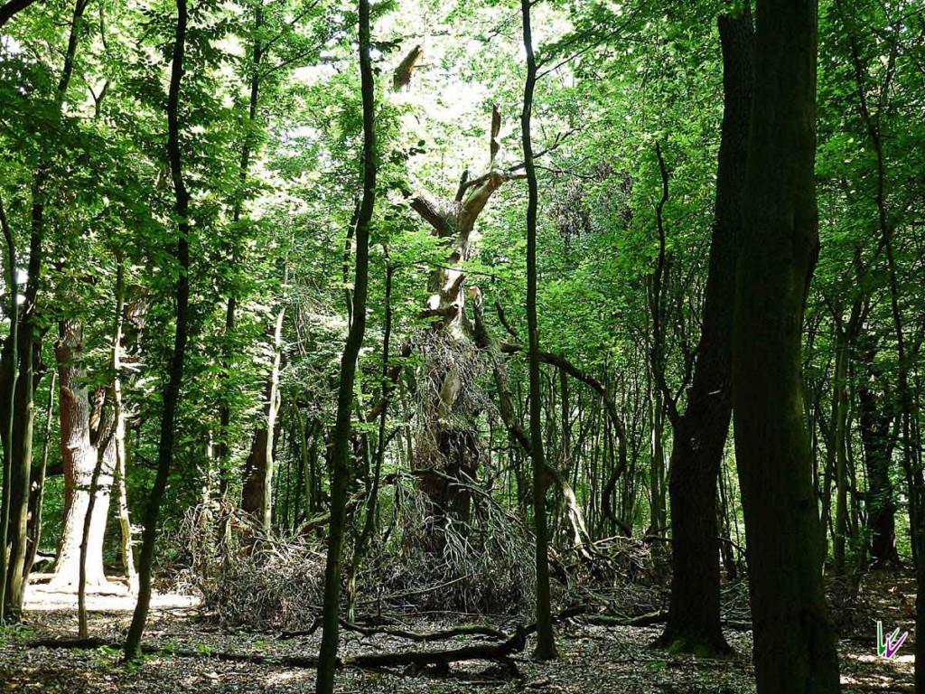 Der Zarth wird auch als Teufelswald bezeichnet