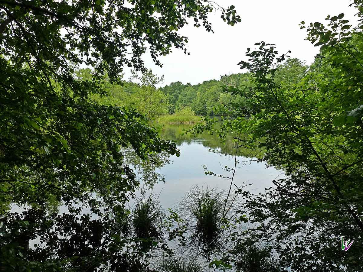 Teich im Zarth
