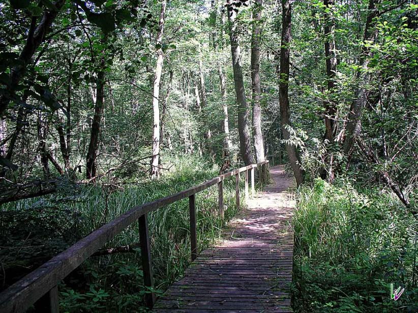 Bohlenweg Nationalpark Unteres Odertal