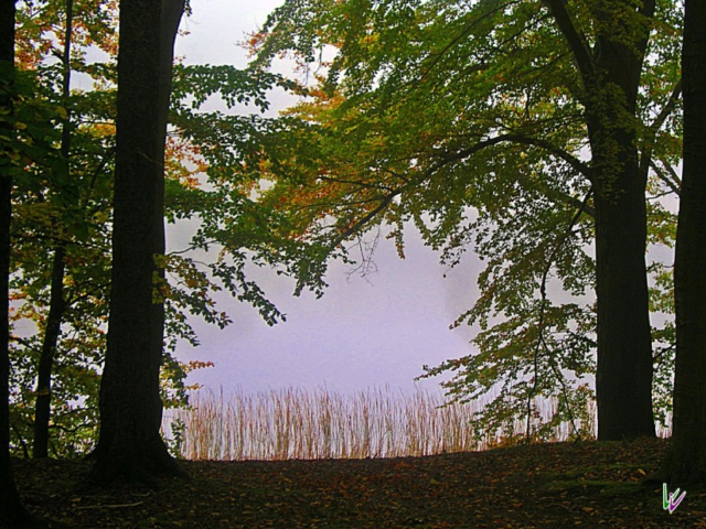 Buckow-See Weltnaturerbe Grumsin