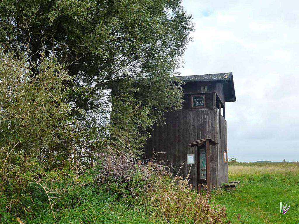 Vogelbeobachtumsturm bei Netzen
