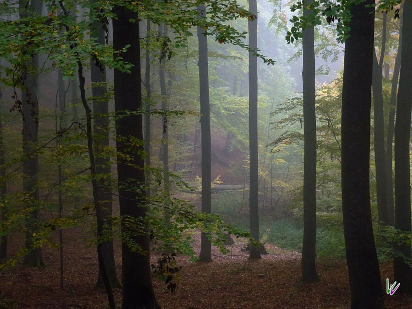 Weltnaturerbe Grumsin im Herbst