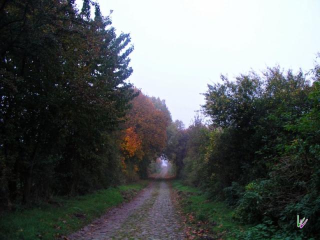 Feldweg zum Grumsin