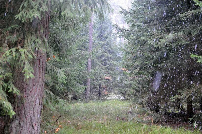Schnee im Fläming