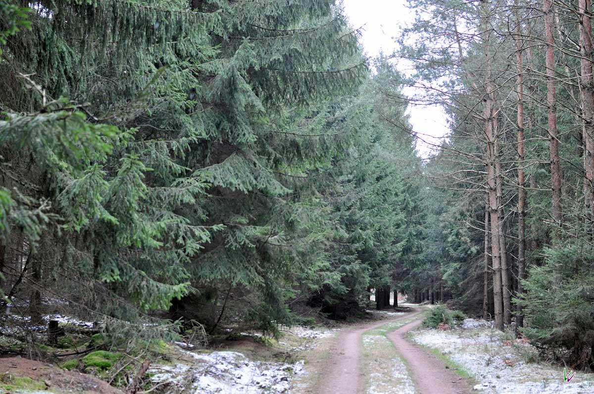 dichter Wald im Fläming
