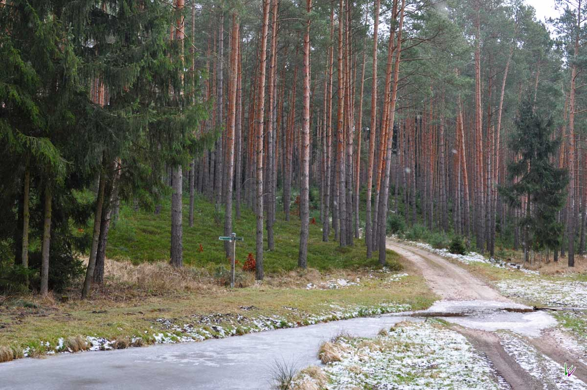 Bach und Wald im Fläming