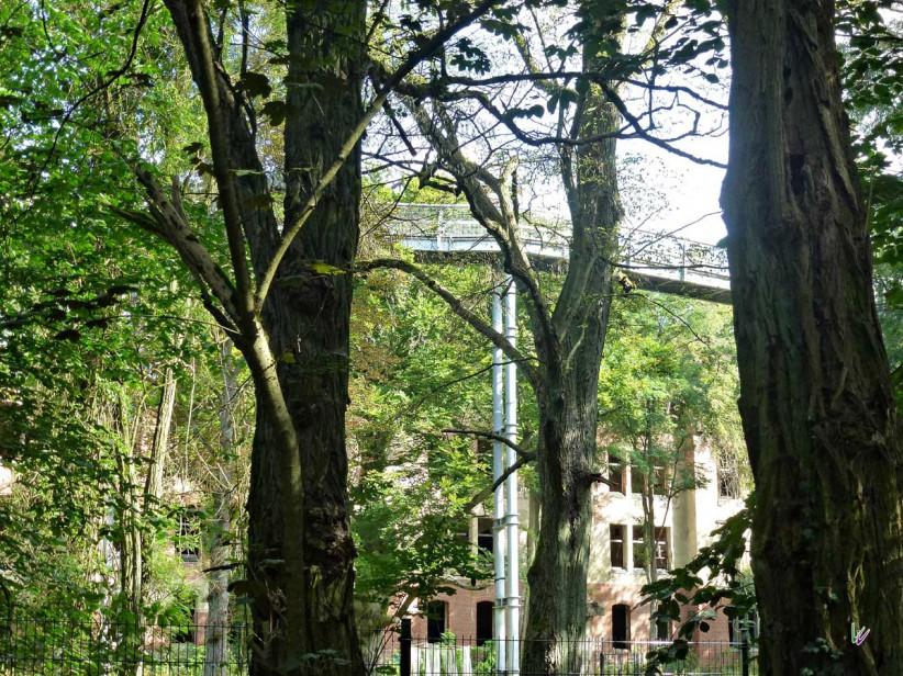 Baumkronenpfad in den Beelitzer Heilstätten