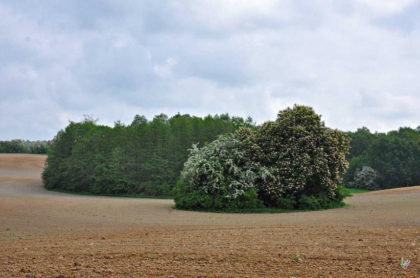 Weissdorn Uckermark
