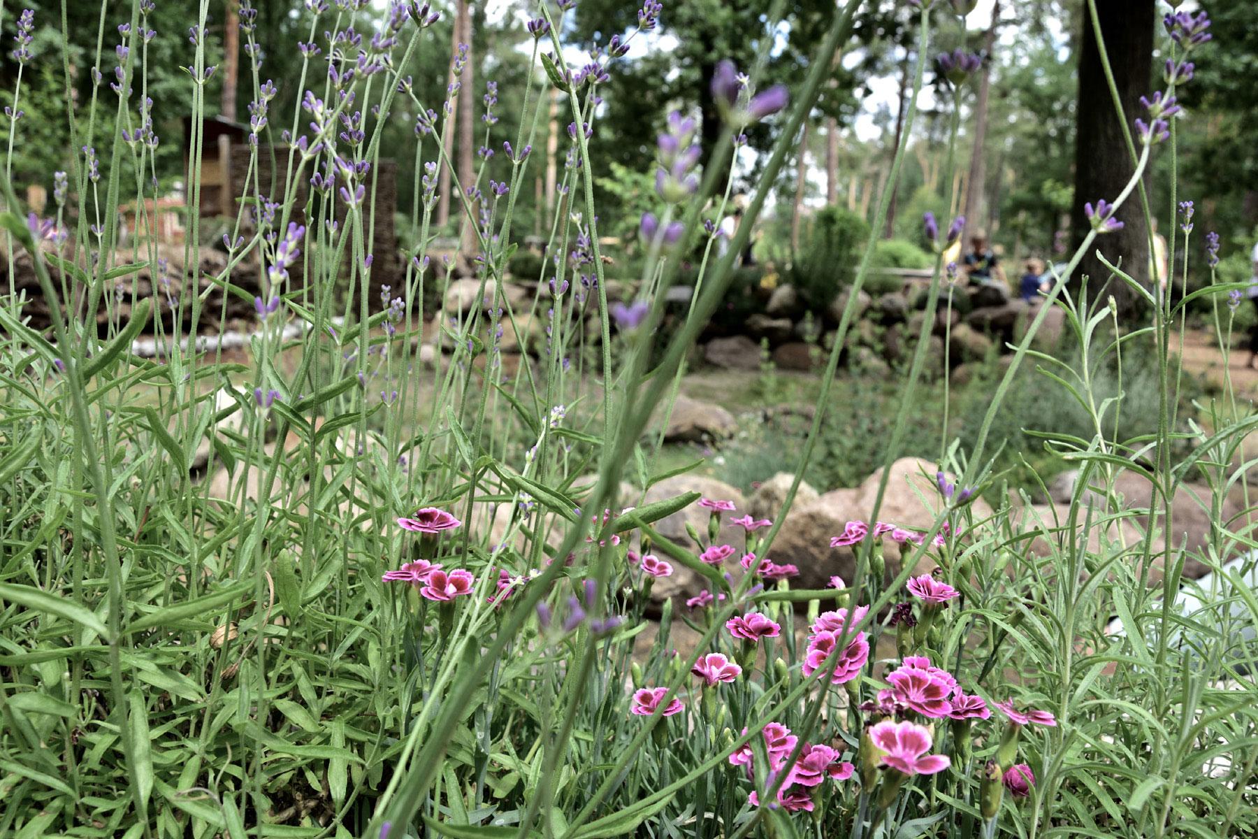 Kräutergarten im Barfußpark Beelitz