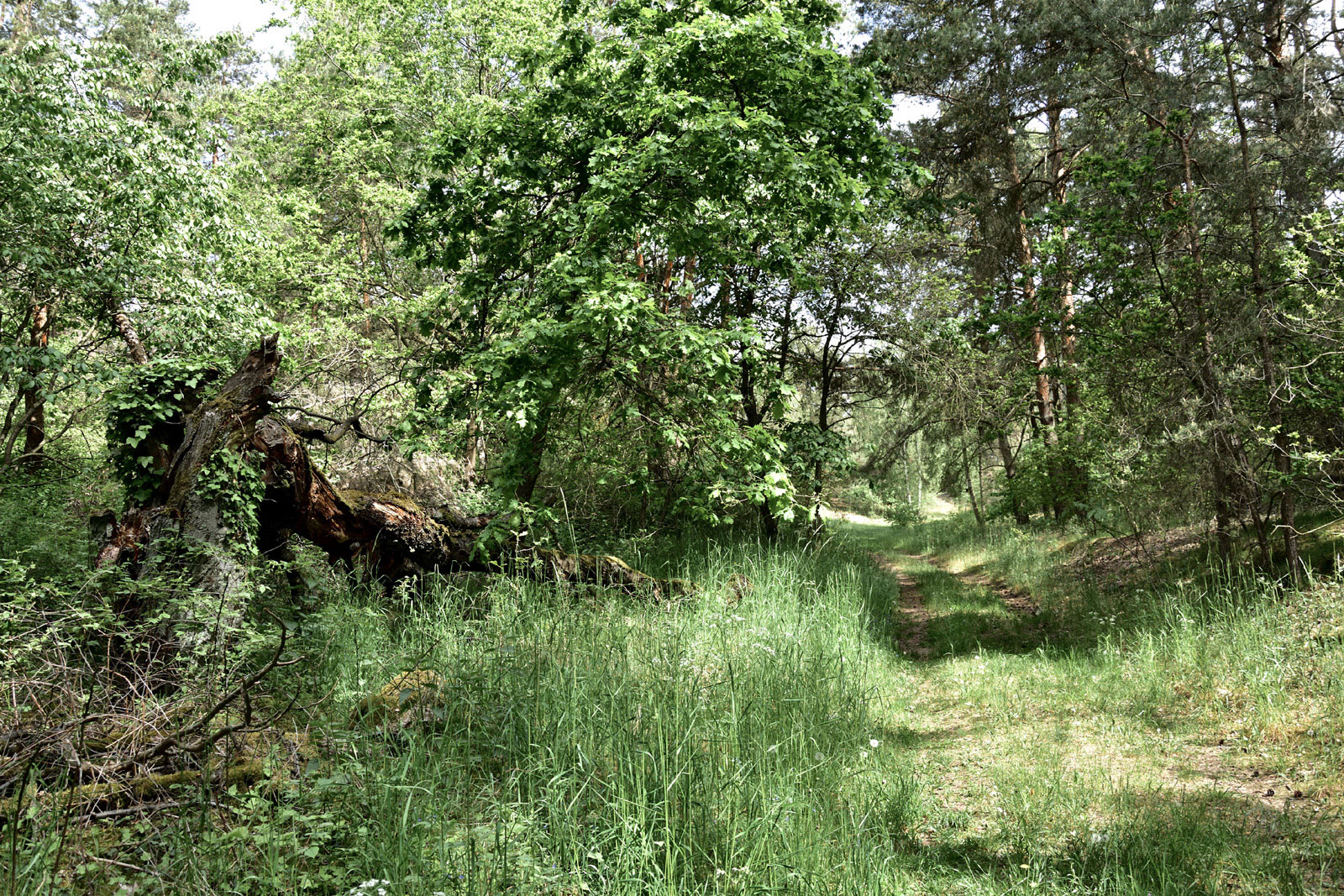 Naturschutzgebiet Gollenberg