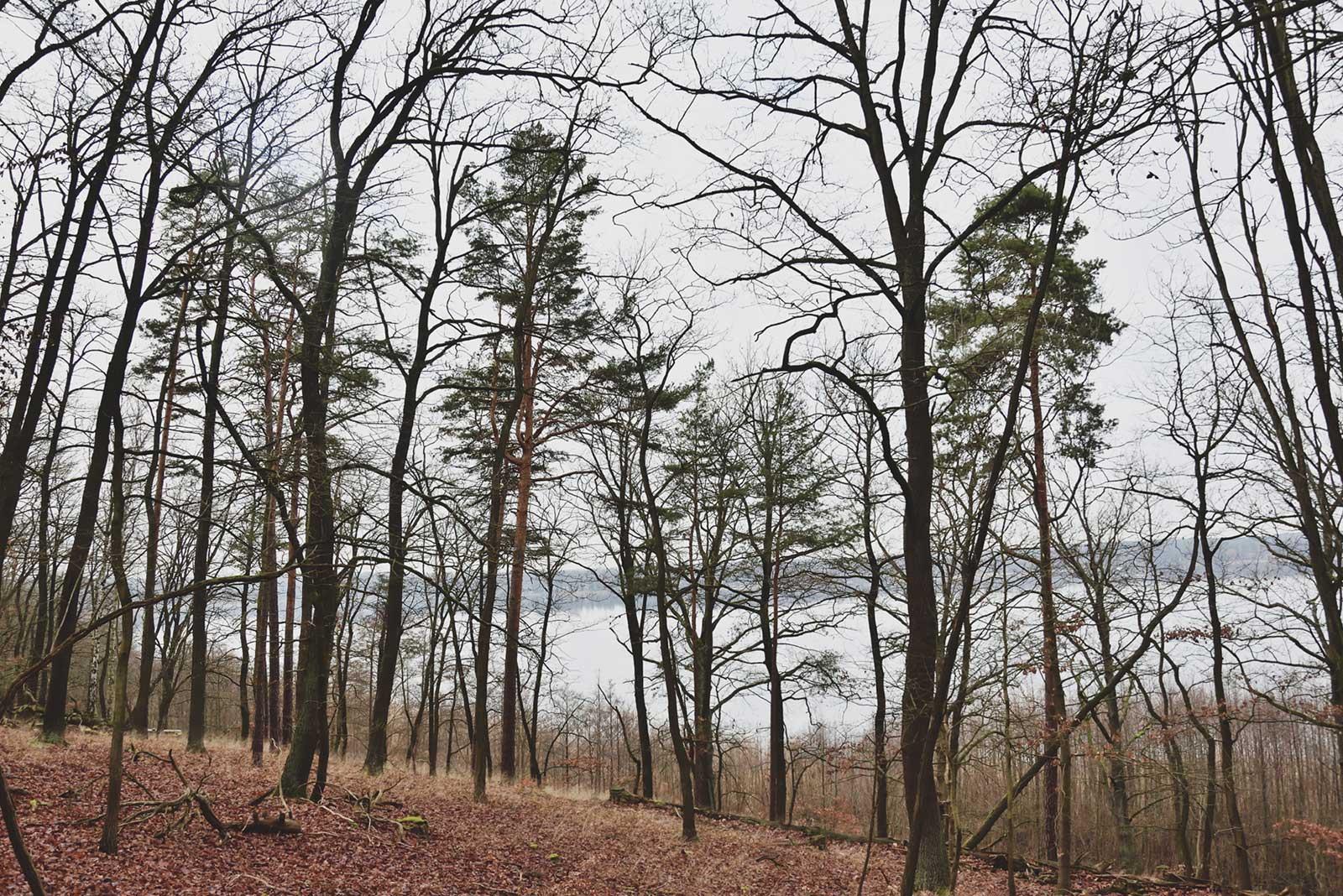 Huteeichenwald Schwielowsee