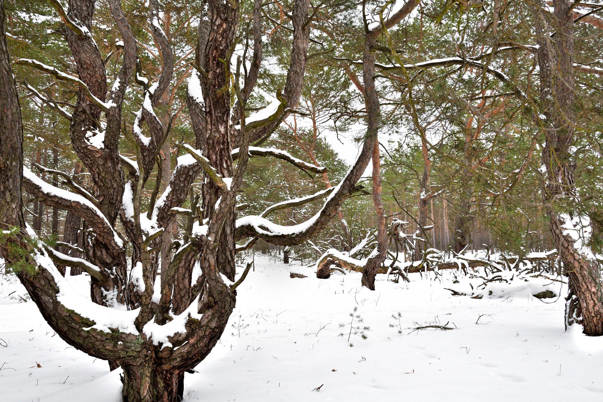 im Märchenwald Dornswalde