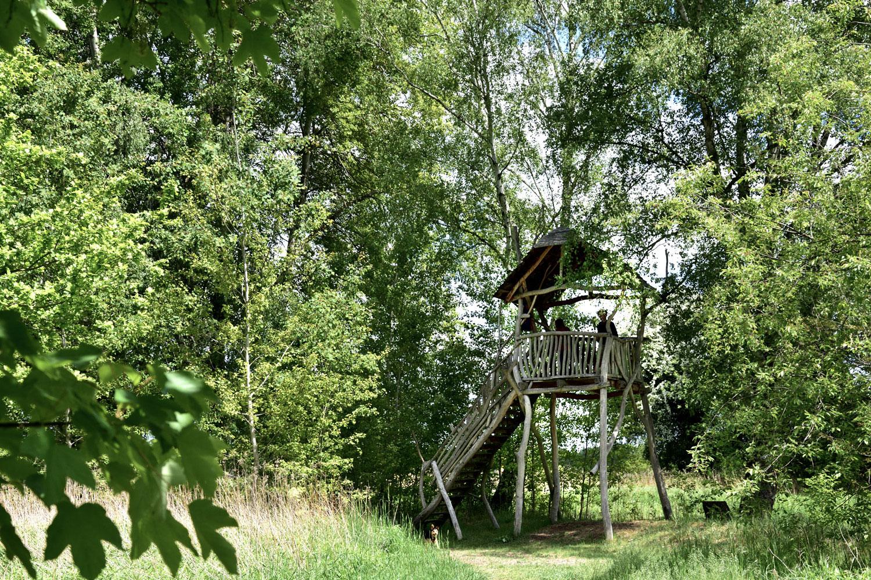 Aussichtsturm mit Blick auf den grünen Waldwichtelpfad
