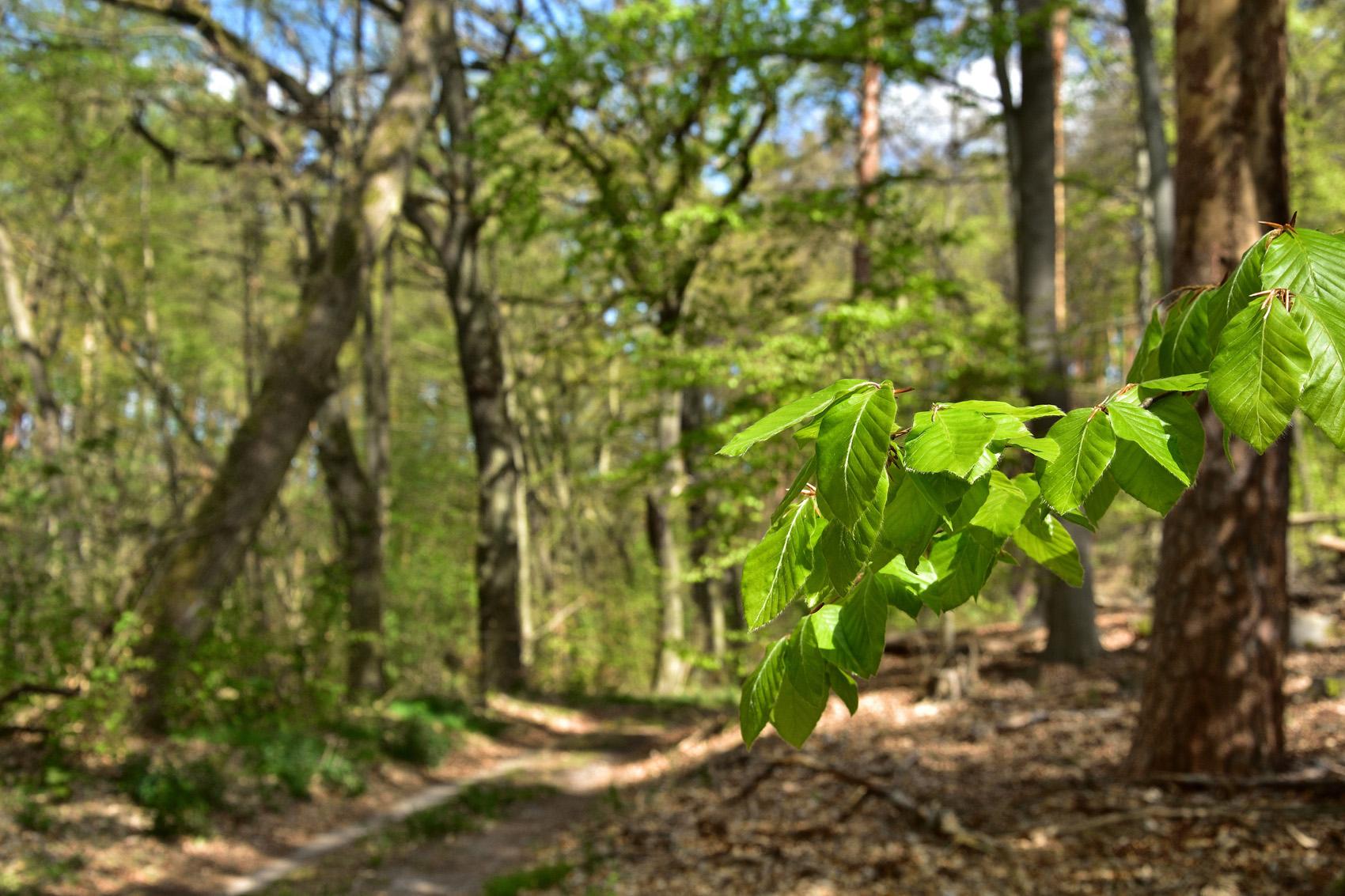 Wandern im Brandenburger Wald