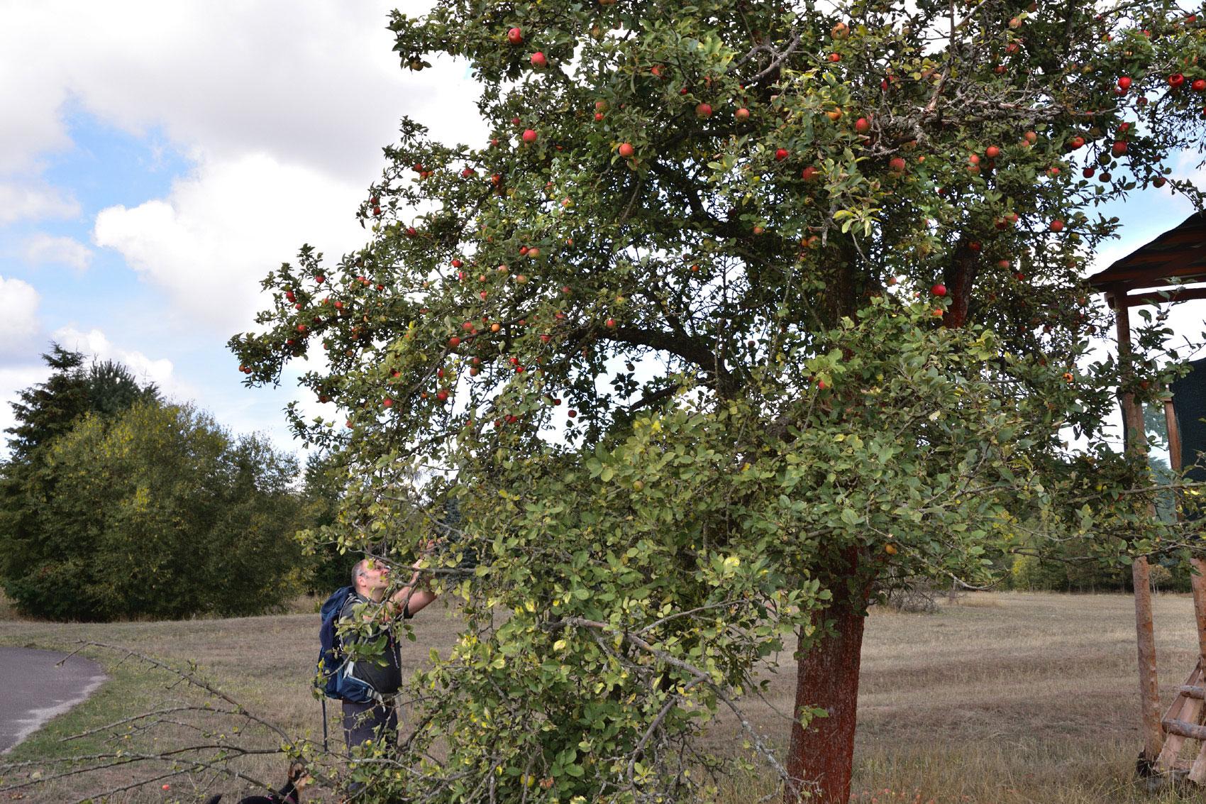 Tipp wanderung in Brandenburg Apfelernte